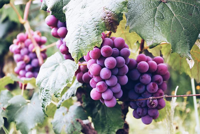 Conheça os poderosos antioxidantes cerebrais encontrados na natureza