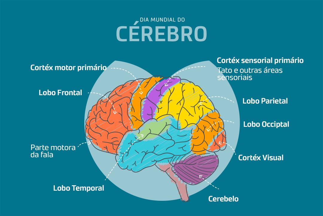 Cérebro e as suas funções